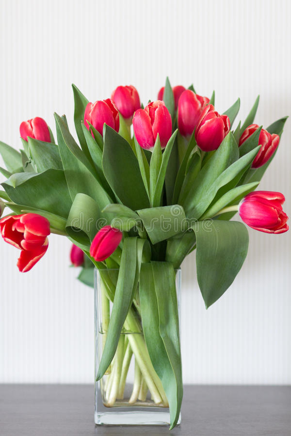 Bouquet of red tulips,. In a transparent vase on a white background stock photography