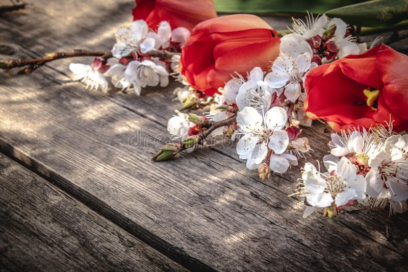 A bouquet of red tulips and branches of white flowers on old wooden boards. Place for text. The concept of spring has come stock photos