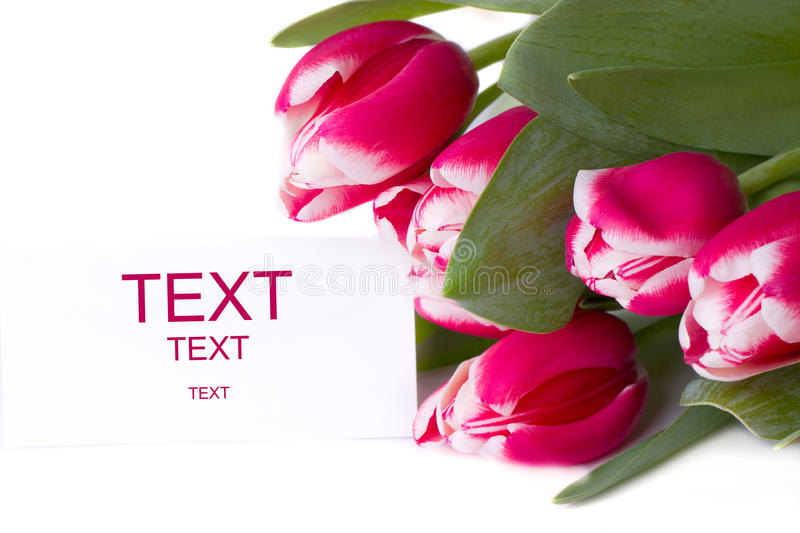 Bouquet of red tulips. isolated stock photography