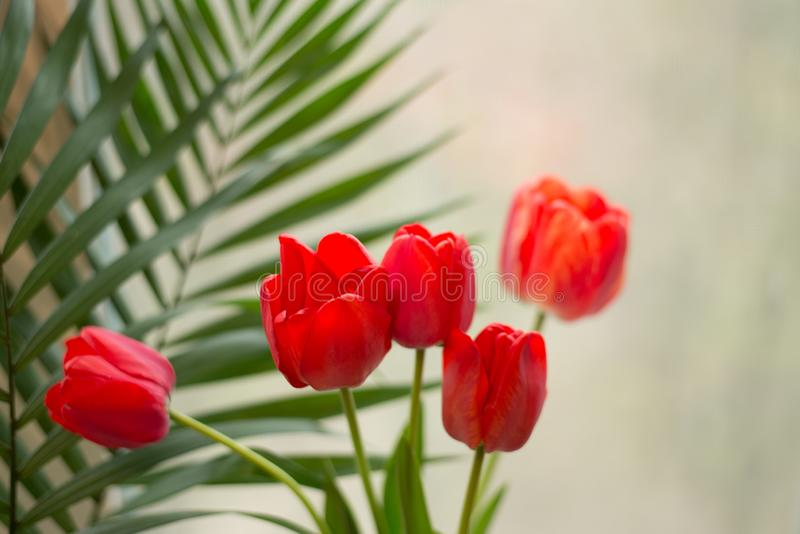 A bouquet of red tulips in a vase on the floor. A gift to a woman`s day from tulip flowers royalty free stock photo