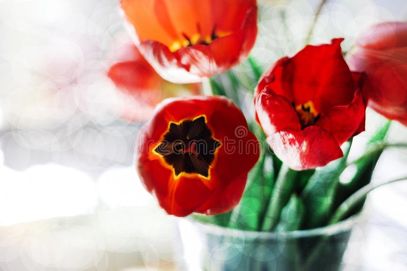 A bouquet of red tulips in a vase on the windowsill. A gift to a woman`s day from red tulip flowers. stock images