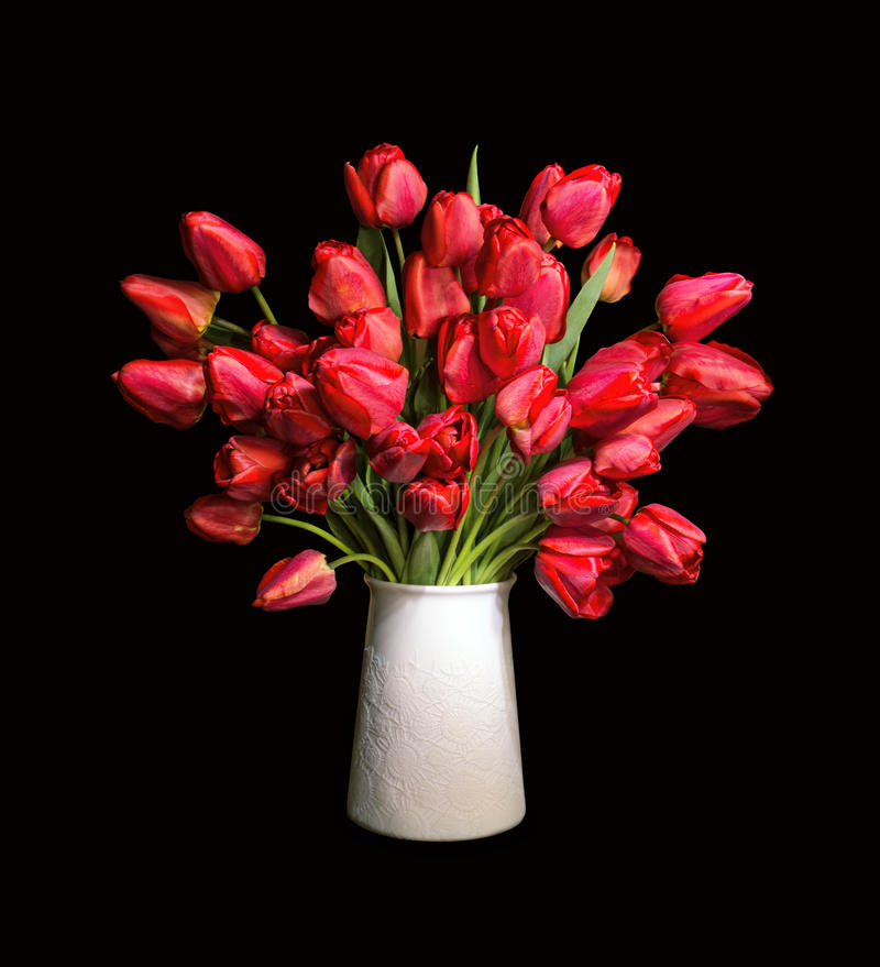 Bouquet of red tulips in white vase. Lush bunch of cheerful elegant vivid red tulips in a white flowerpot isolated on black backdrop with clipping path. View royalty free stock images