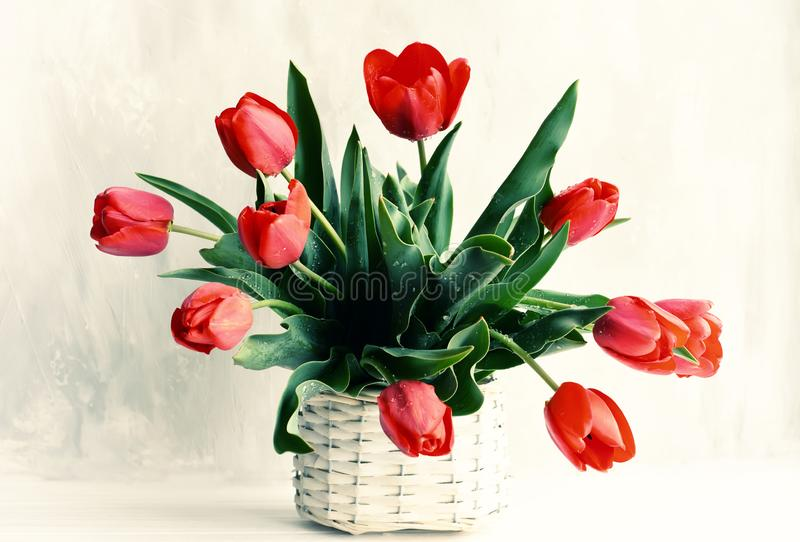 Bouquet of red tulips in a wicker vintage basket on a gray background. Vintage style stock images