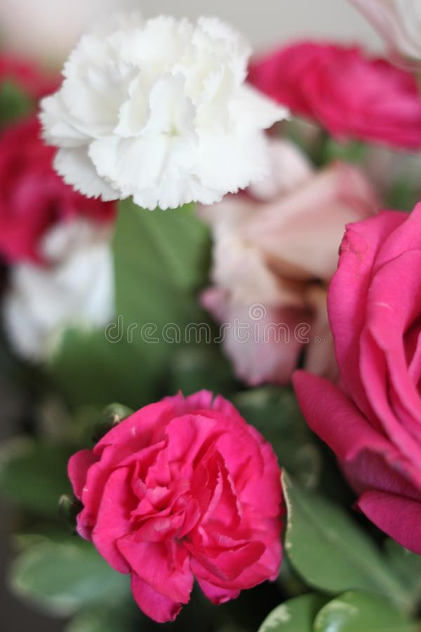 Rose bouquet 1723. A bouquet of red white and pink roses royalty free stock photos