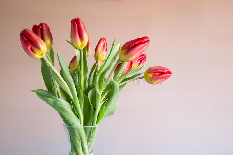 Bouquet of red and yellow tulips stock image