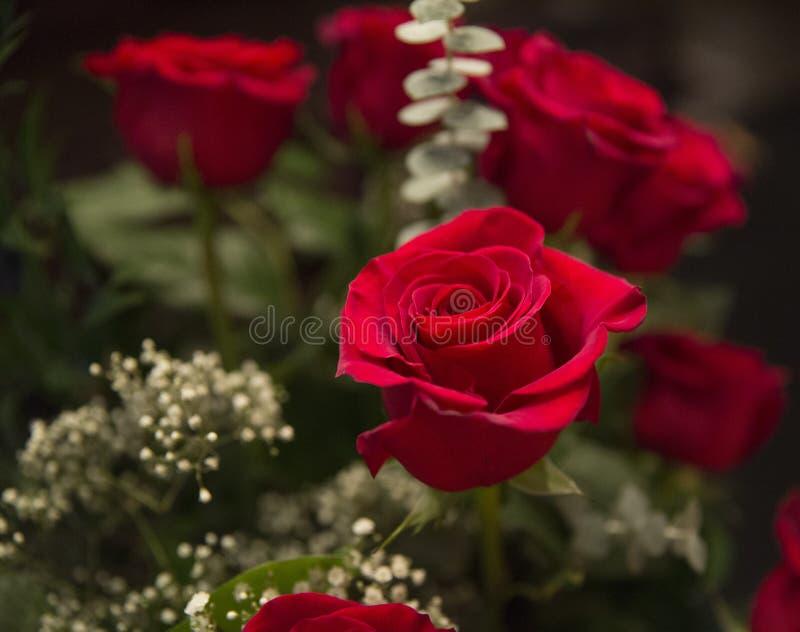 bouquet rose photos libres de droits