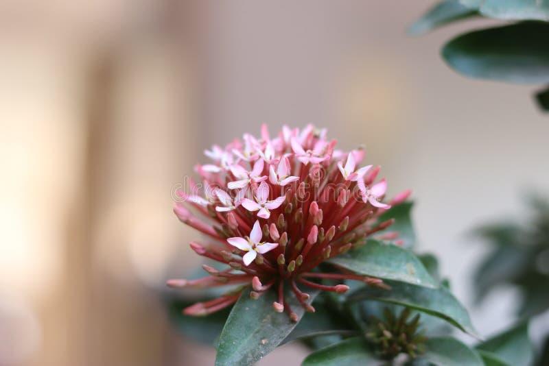 Bouquet rose de fleur photo libre de droits
