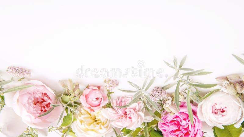 Bouquet Rose De Fleur Du Bel Anglais Sur Le Fond Blanc Photo stock - Image du fond, anglais ...