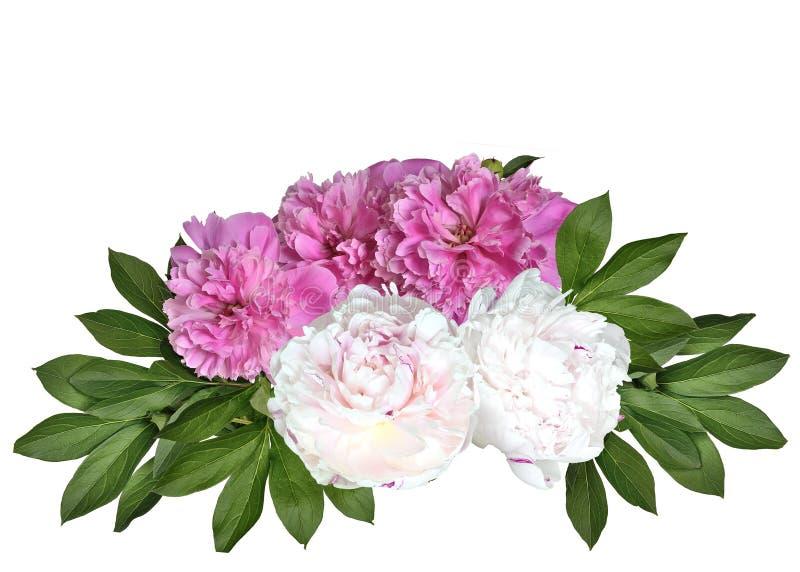 Bouquet rose et blanc de pivoines d'isolement sur un fond blanc photos libres de droits