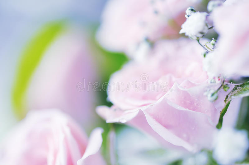 Download Bouquet of roses. stock photo. Image of present, flora - 18267406