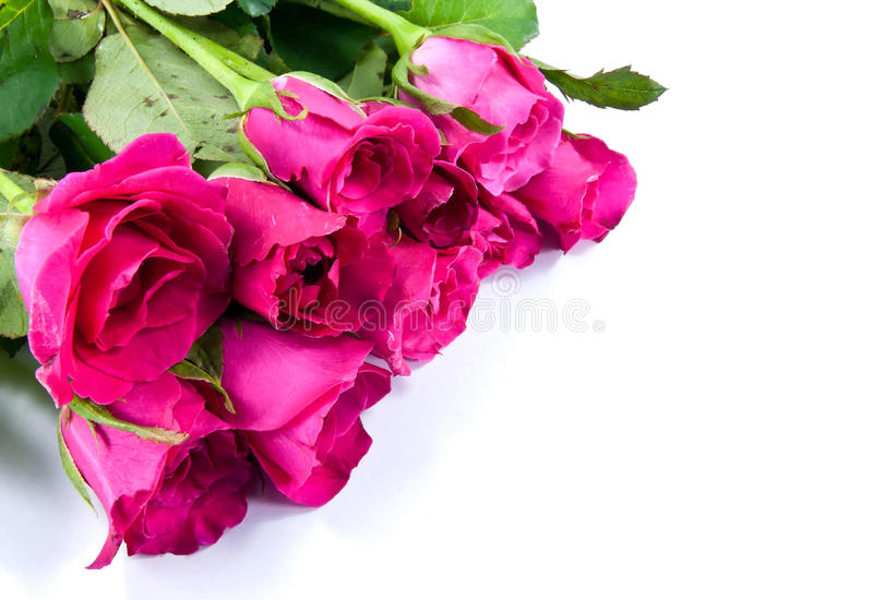 Bouquet of Roses. With white space stock images