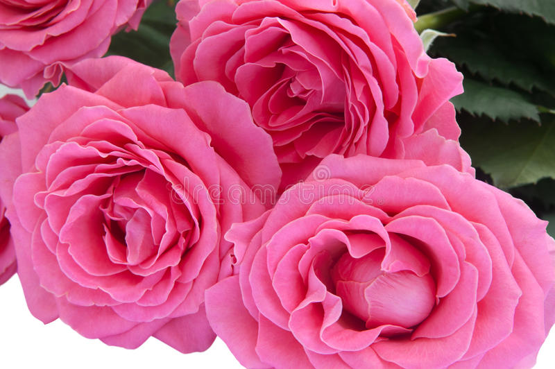 Download Bouquet of roses stock image. Image of closeup, date - 22871965