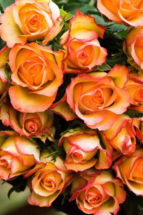 Bouquet of roses. A fresh bouquet of orange and yellow roses to give to royalty free stock photos