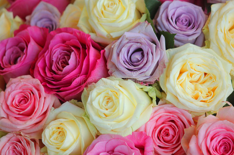 Bouquet of roses of different colours royalty free stock images