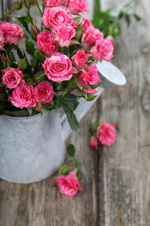 Bouquet of roses in a watering can. On a wooden background royalty free stock image