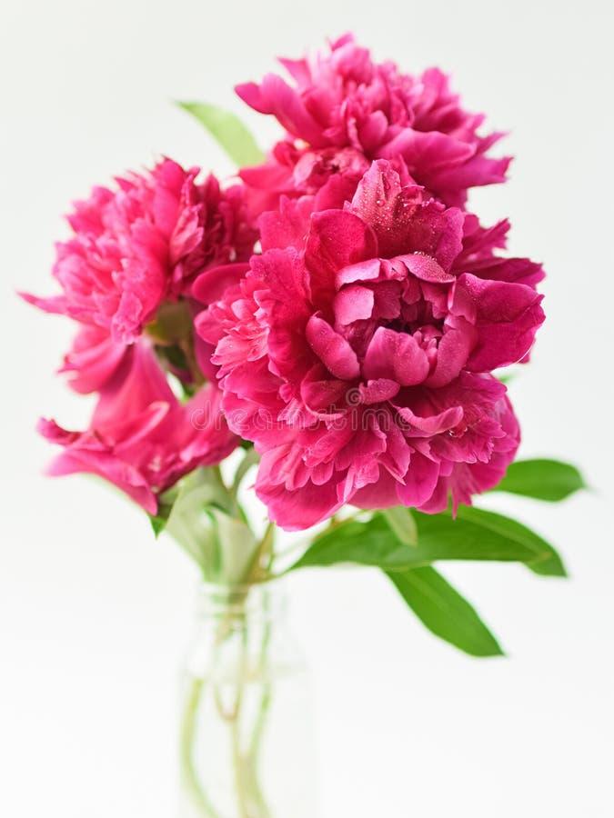 Bouquet rouge de pivoines dans un vase en verre sur un fond d'isolement blanc Fleurs fra?ches Foyer s?lectif Cadre vertical images stock