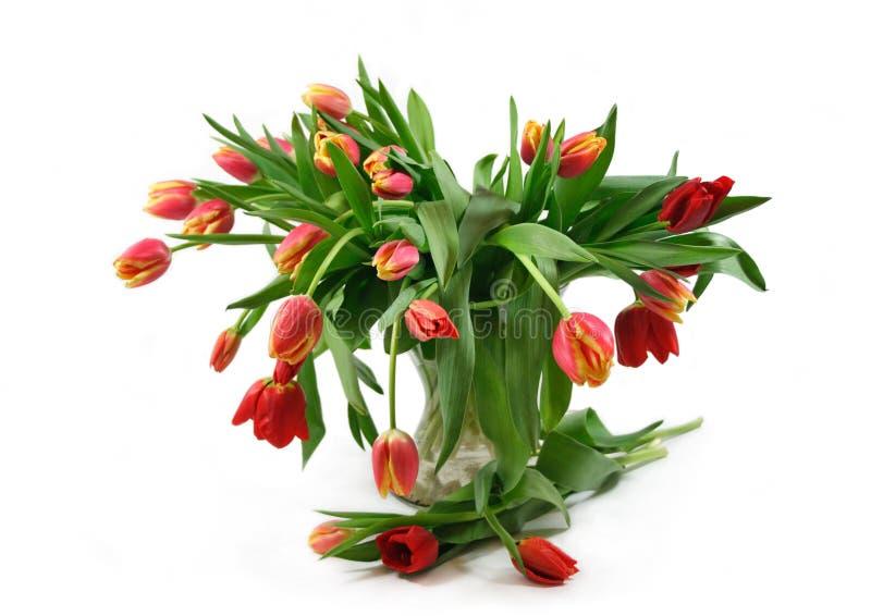 Bouquet rouge de tulipes photographie stock libre de droits