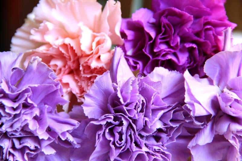 bouquet sensible de cinq oeillets dans des couleurs lilas, pourpres et roses photographie stock