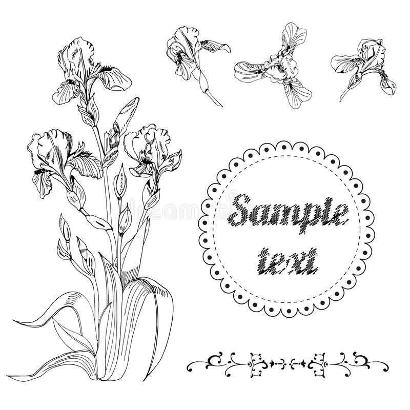 Bouquet and single buds of iris flowers. Hand drawn ink sketch. Set of black objects isolated on white background stock illustration