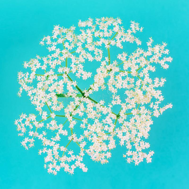 Bouquet of small delicate white flowers on a blue pastel background close-up stock photos