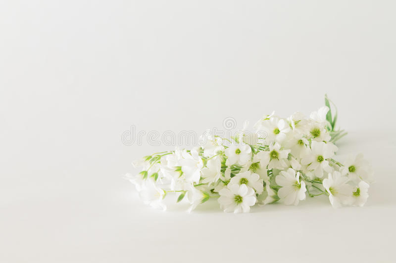 Bouquet Of Small White Flowers On A White Background Stock Photo ...
