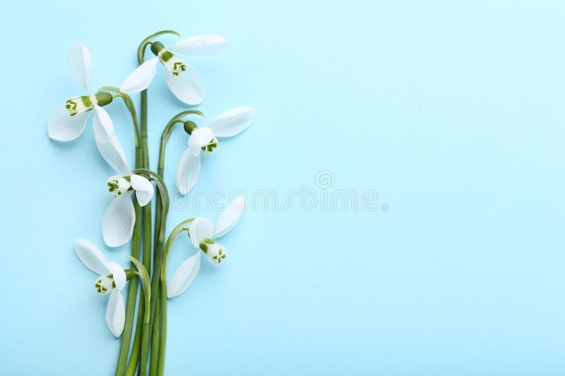 Bouquet of snowdrop flowers royalty free stock image