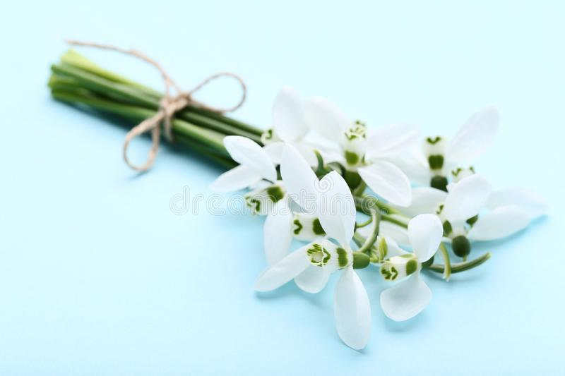Bouquet of snowdrop flowers stock photography