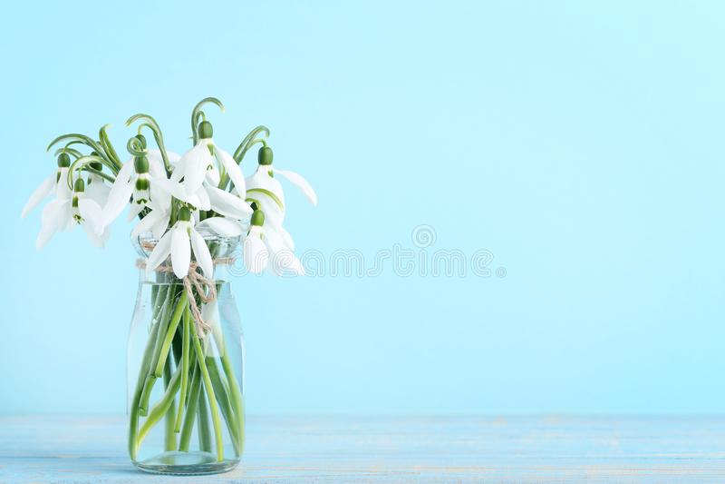 Bouquet of snowdrop flowers stock photos