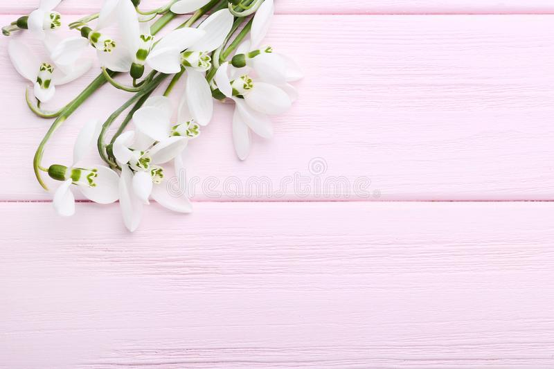Bouquet of snowdrop flowers royalty free stock photo