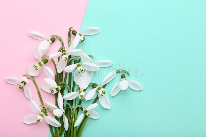 Bouquet of snowdrop flowers stock images