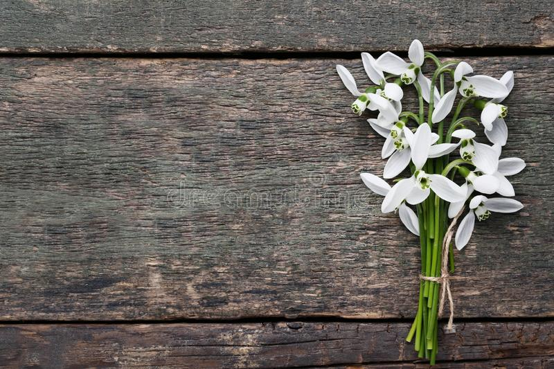 Bouquet of snowdrop flowers royalty free stock photos