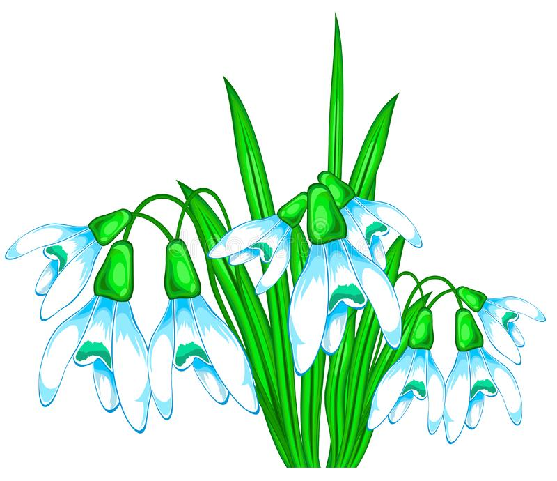 Download Bouquet of snowdrops stock vector. Image of snowdrops - 4207552