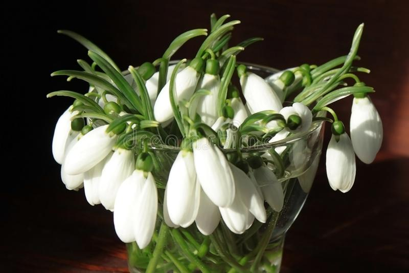 Bouquet of snowdrops in a glass vase on a wooden table in the morning light of the sun stock photos