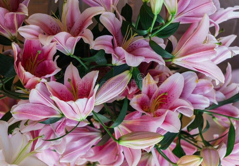 Bouquet of soft pink lilies. Background of bright flowers royalty free stock photo