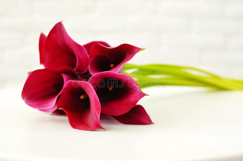 Bouquet of calla lily royalty free stock photography