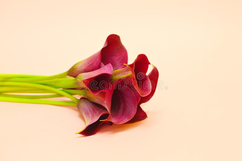 Bouquet of calla lily royalty free stock image