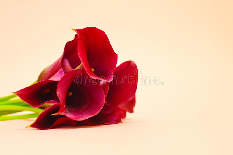 Bouquet of calla on table royalty free stock photography