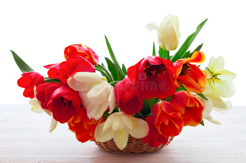 Bouquet of spring flower tulips royalty free stock photos