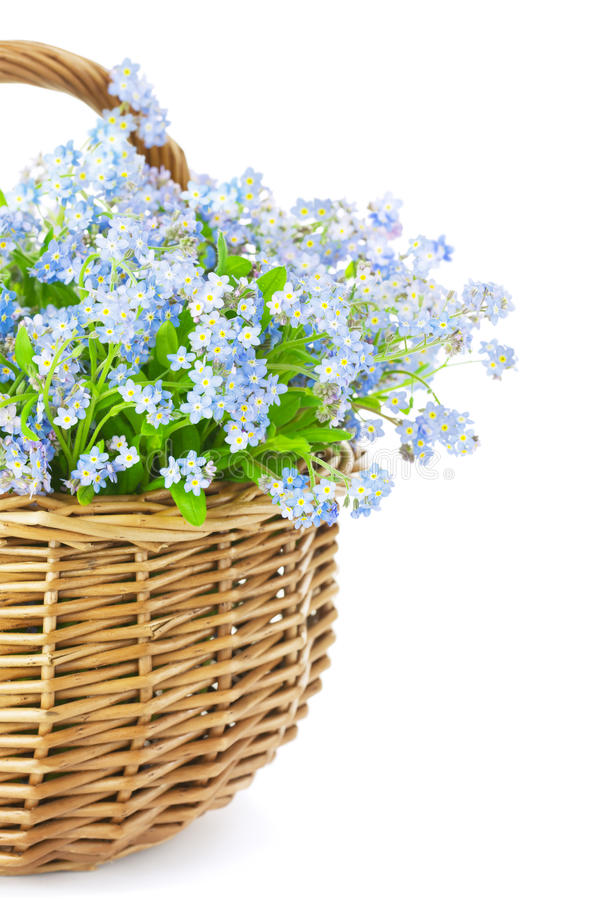 Bouquet of spring flowers in basket isolated on white background. Bouquet of blue spring flowers in basket isolated on white background / Gift with love royalty free stock images