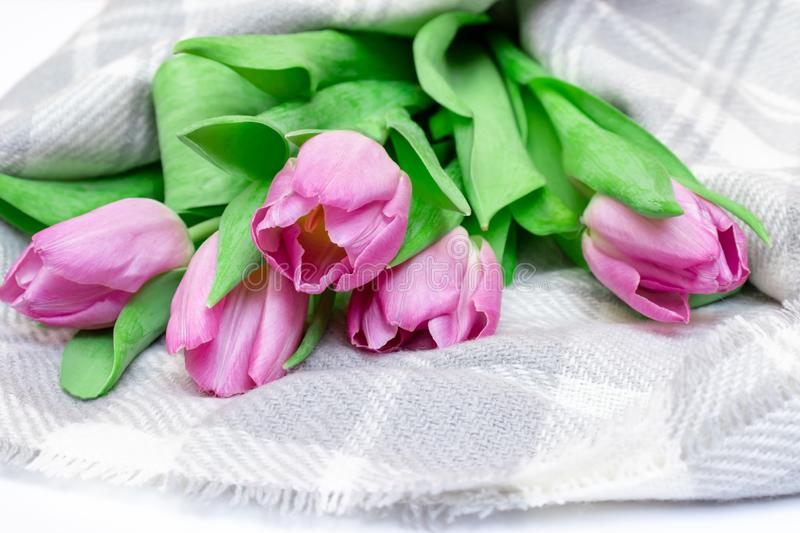 Bouquet of spring flowers, pink tulips on checkered plaid background close up - holiday card for 8 march, Valentine day or mother stock photo