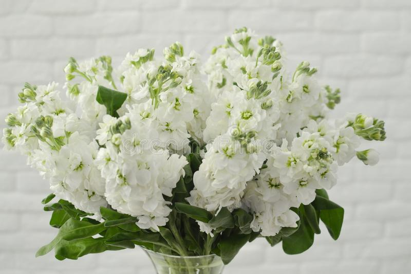 Bouquet of a spring mattiola. royalty free stock image