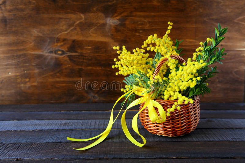 Bouquet of spring mimosa. Flowers stock photos