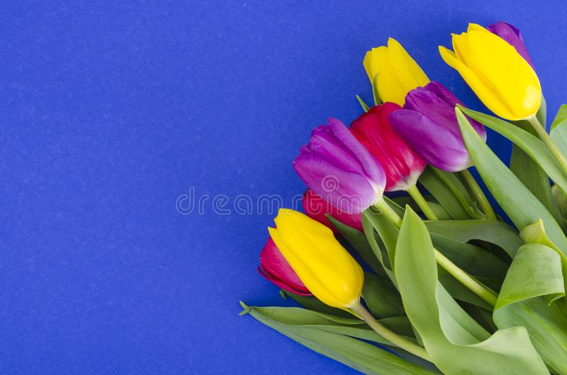 Bouquet of spring multicolored tulips on bright background. Studio Photo royalty free stock photos
