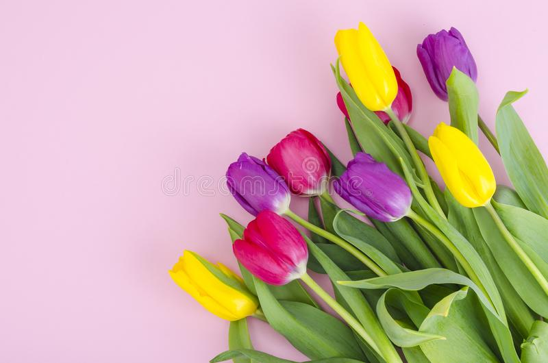 Bouquet of spring multicolored tulips on bright background. Studio Photo stock images