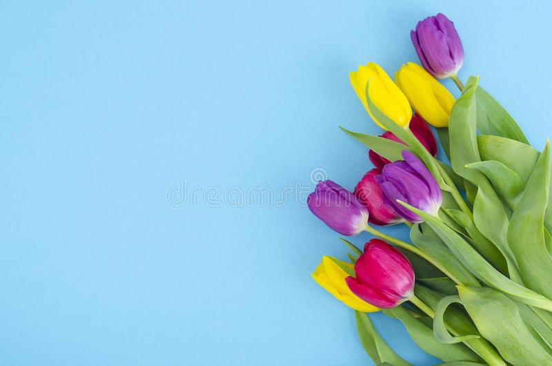 Bouquet of spring multicolored tulips on bright background. Studio Photo stock photography