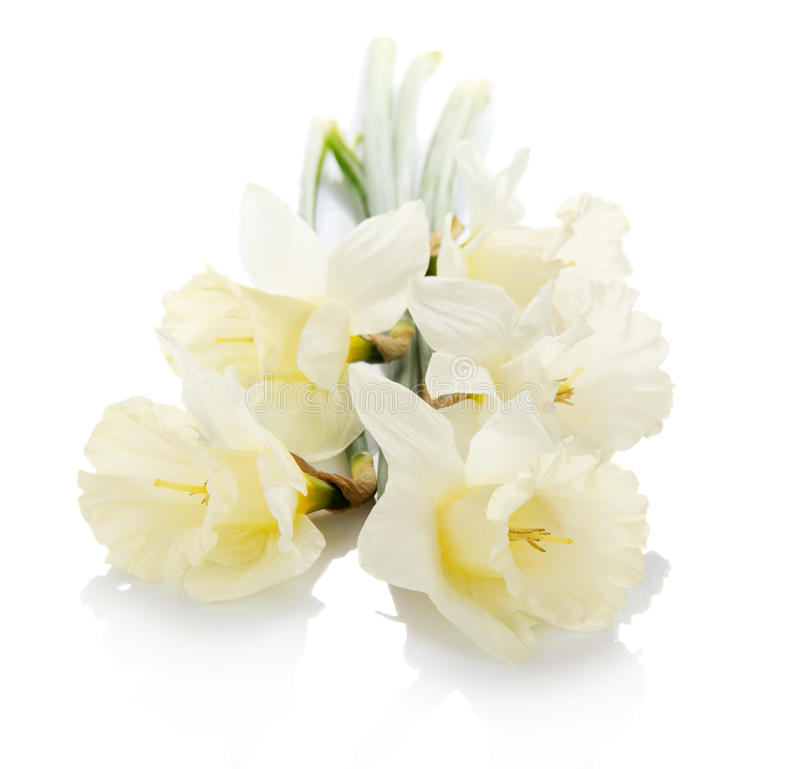 Download Bouquet Of The Spring Narcissuses Stock Image - Image: 41962077