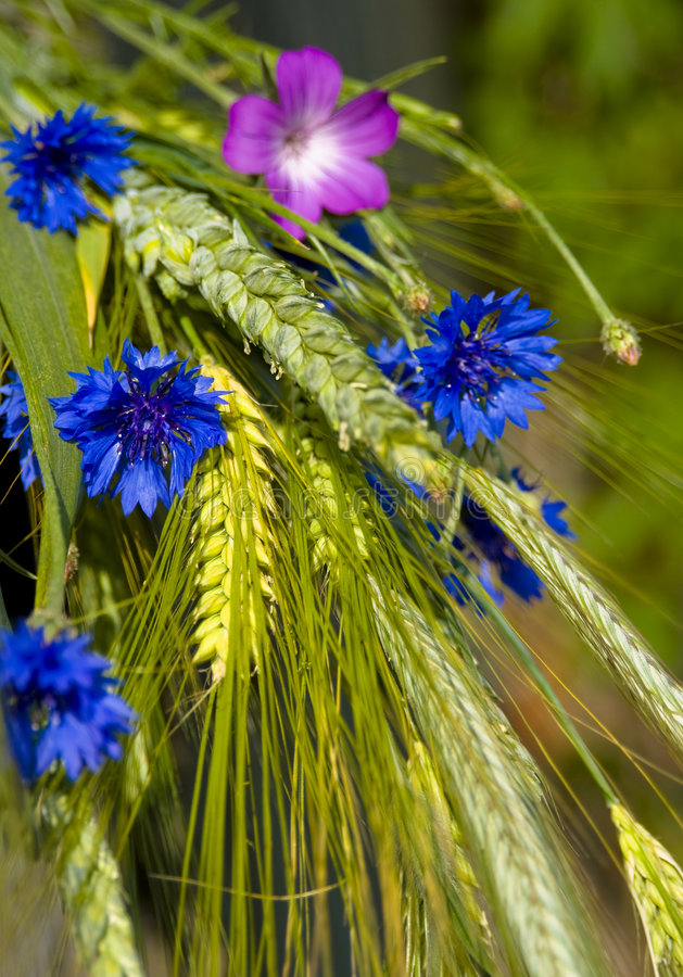 Bouquet from summer field royalty free stock images