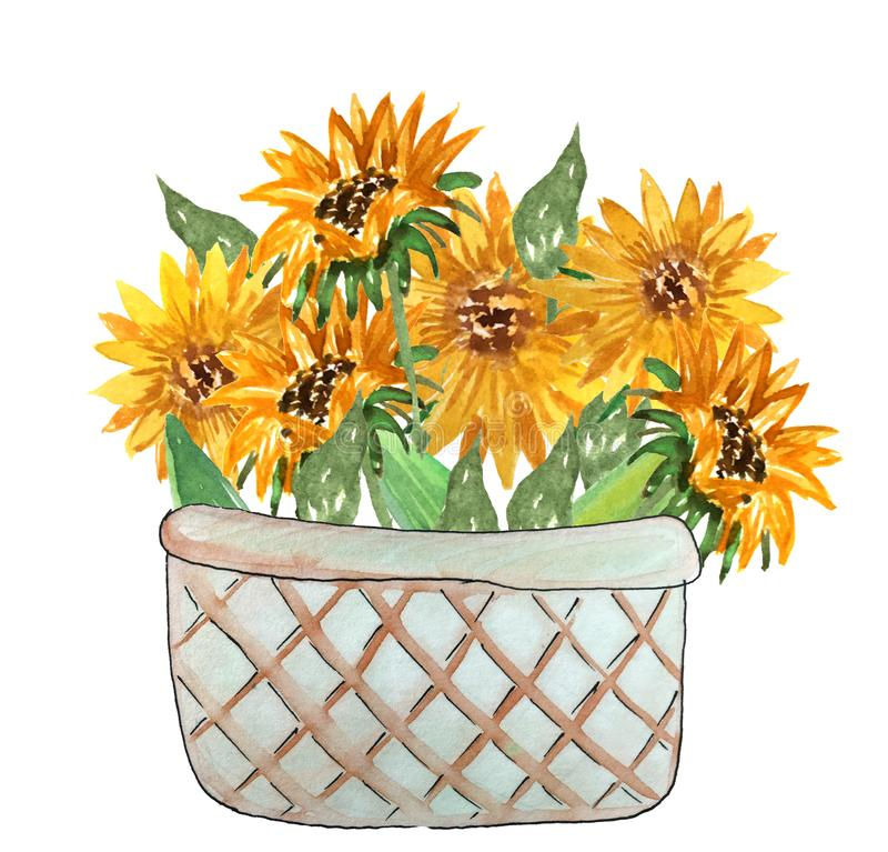 Bouquet of sunflowers in a basket. royalty free illustration
