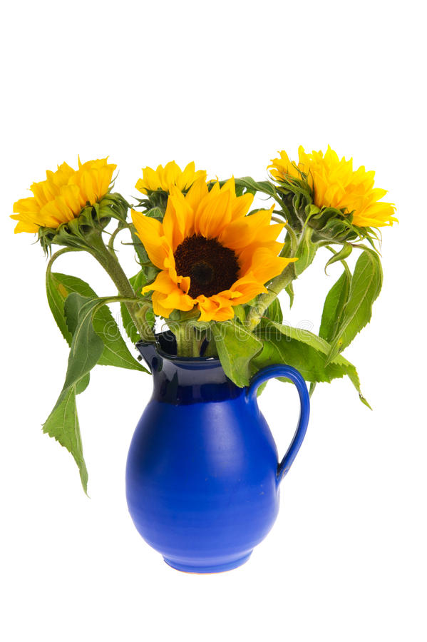 Bouquet Sunflowers In Blue Vase Royalty Free Stock Photo ...