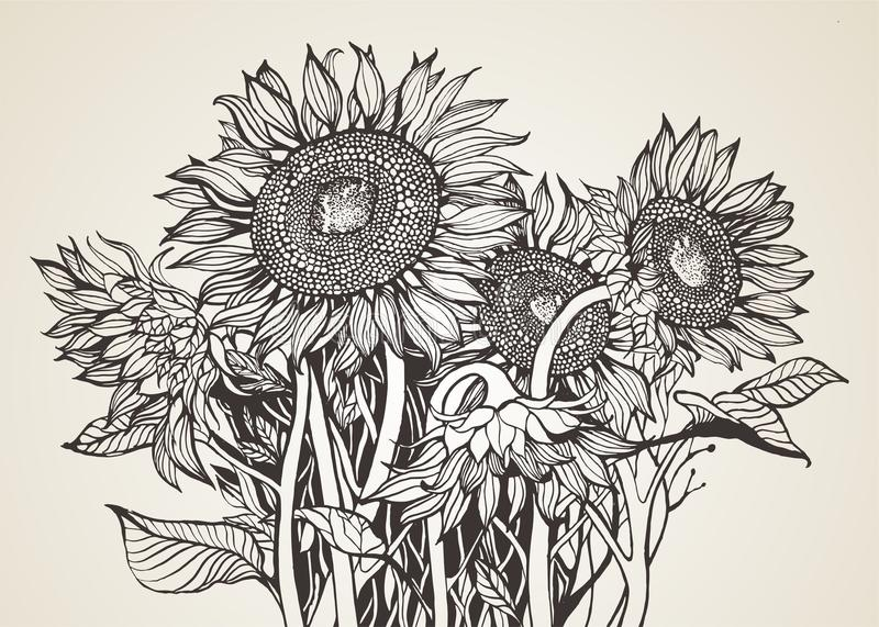 Bouquet of sunflowers stock illustration